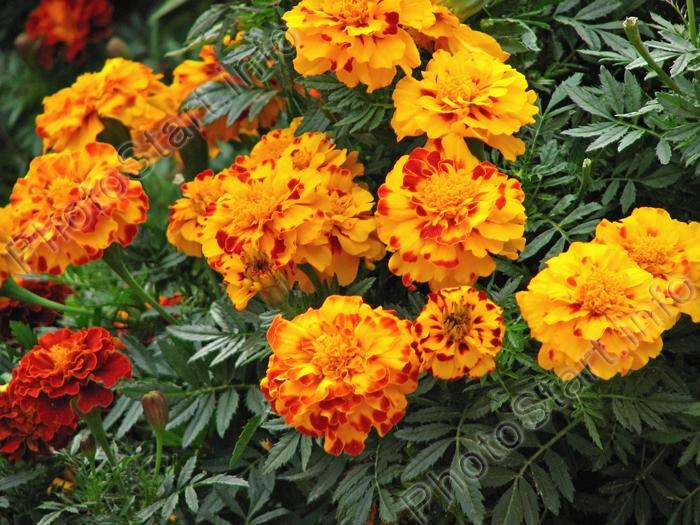 Купить подставки под цветы в Москве и Подмосковье